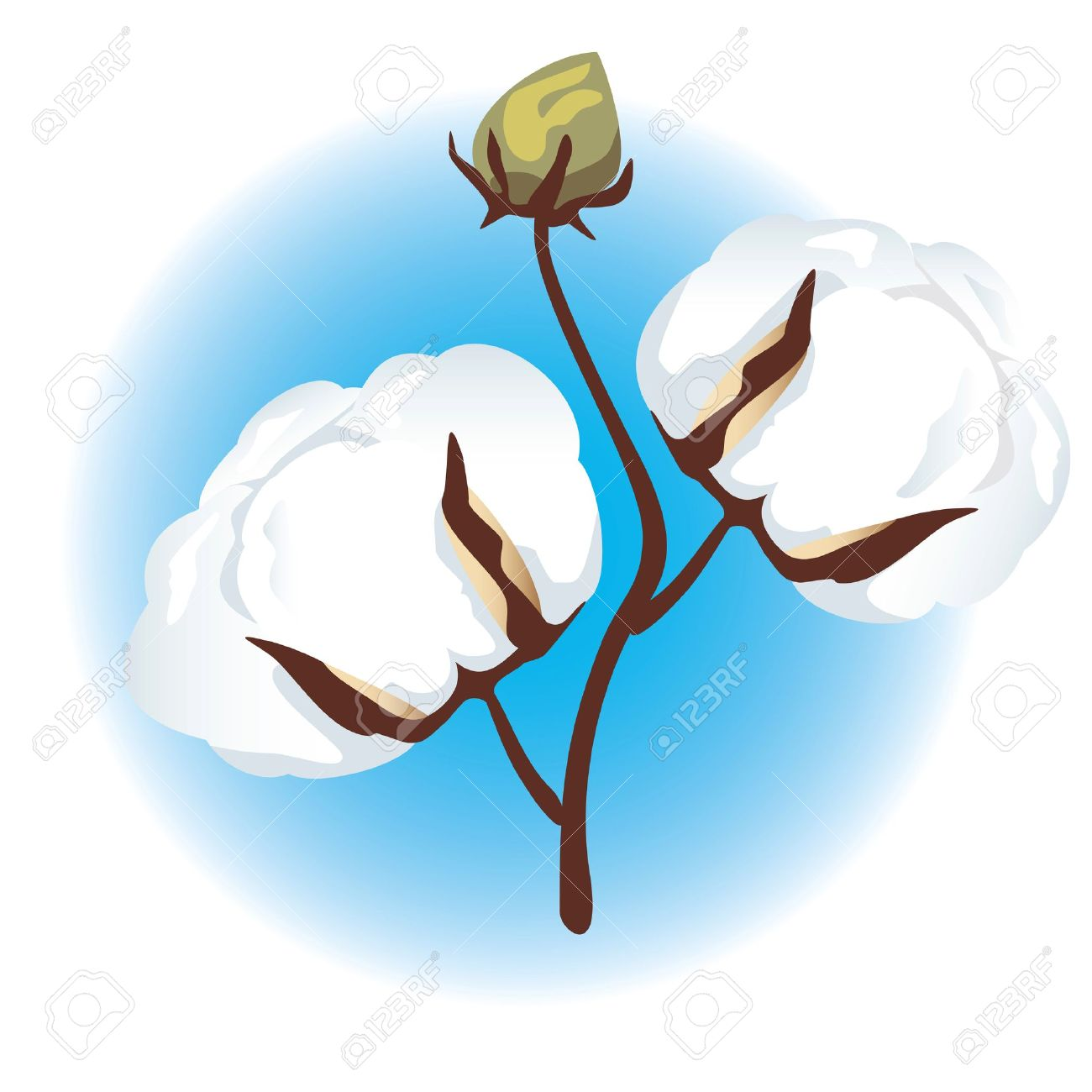 Cotton flower clipart.