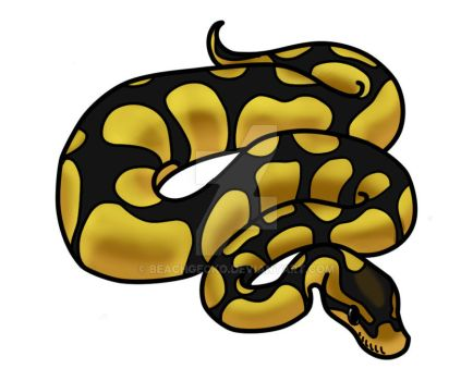Ball Python Art on BallPythonClub.