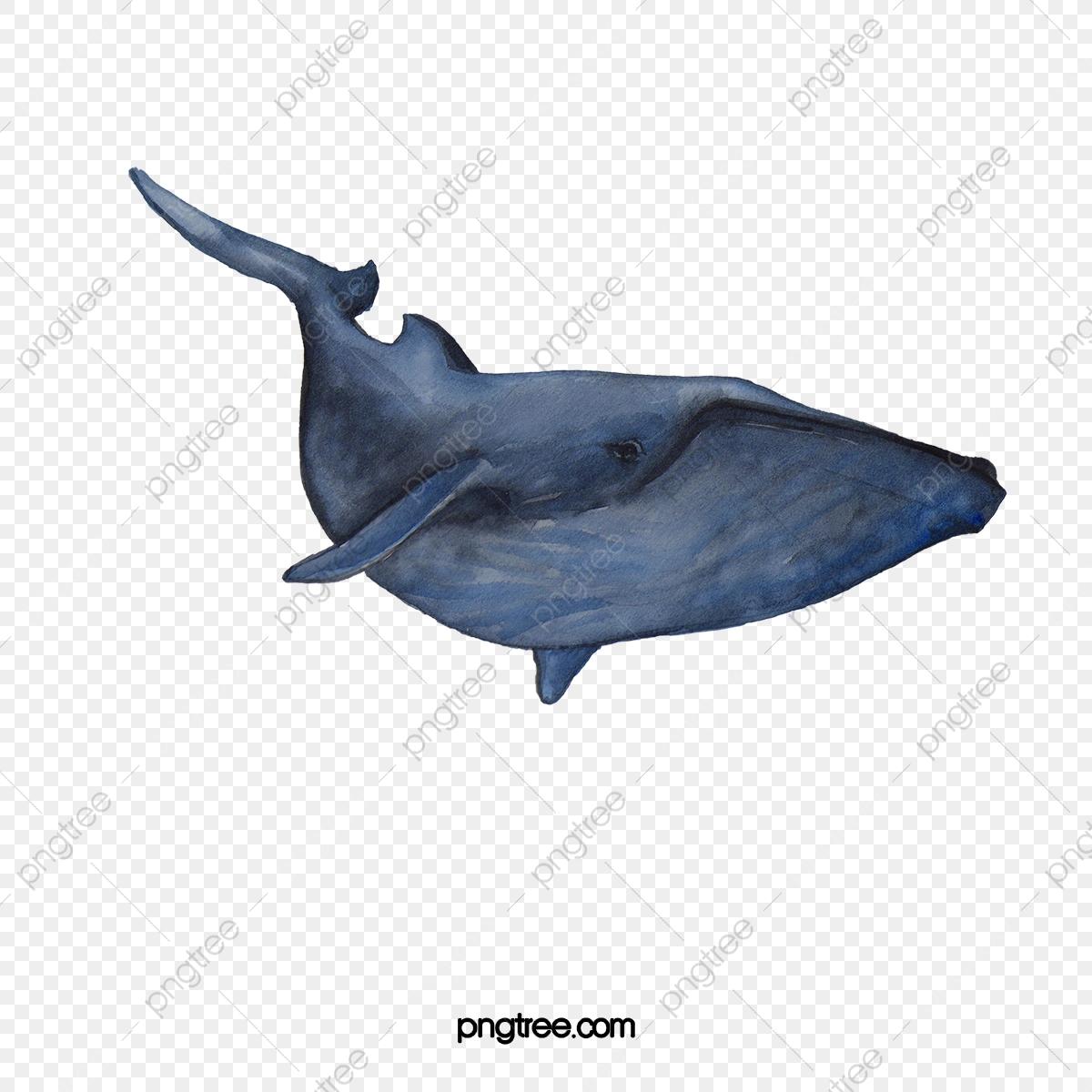 Ballena Azul, Azul, Ballena, Criaturas Acuaticas Archivo PNG y PSD.