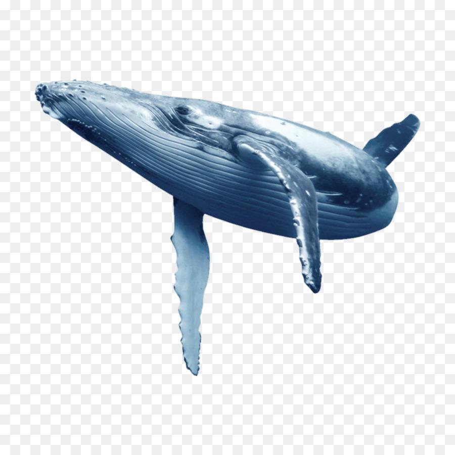 La Ballena Azul, Delfin, Las Ballenas imagen png.