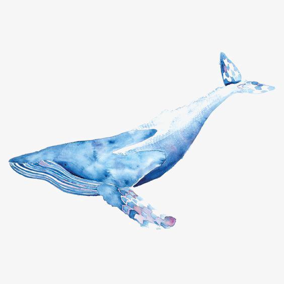 Acuarela Ballena, Ballena Azul, Ballena Azul, Ocean Imagen PNG para.