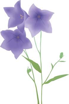 Bell Flower 6, Vectors.