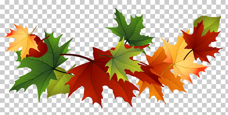 Autumn leaf color , Fall Transparent Leaves , red and green.