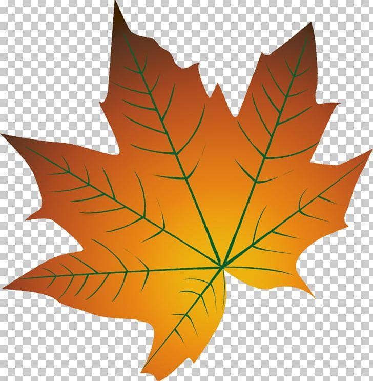 Autumn Leaf Color Cartoon Autumn Leaf Color PNG, Clipart.