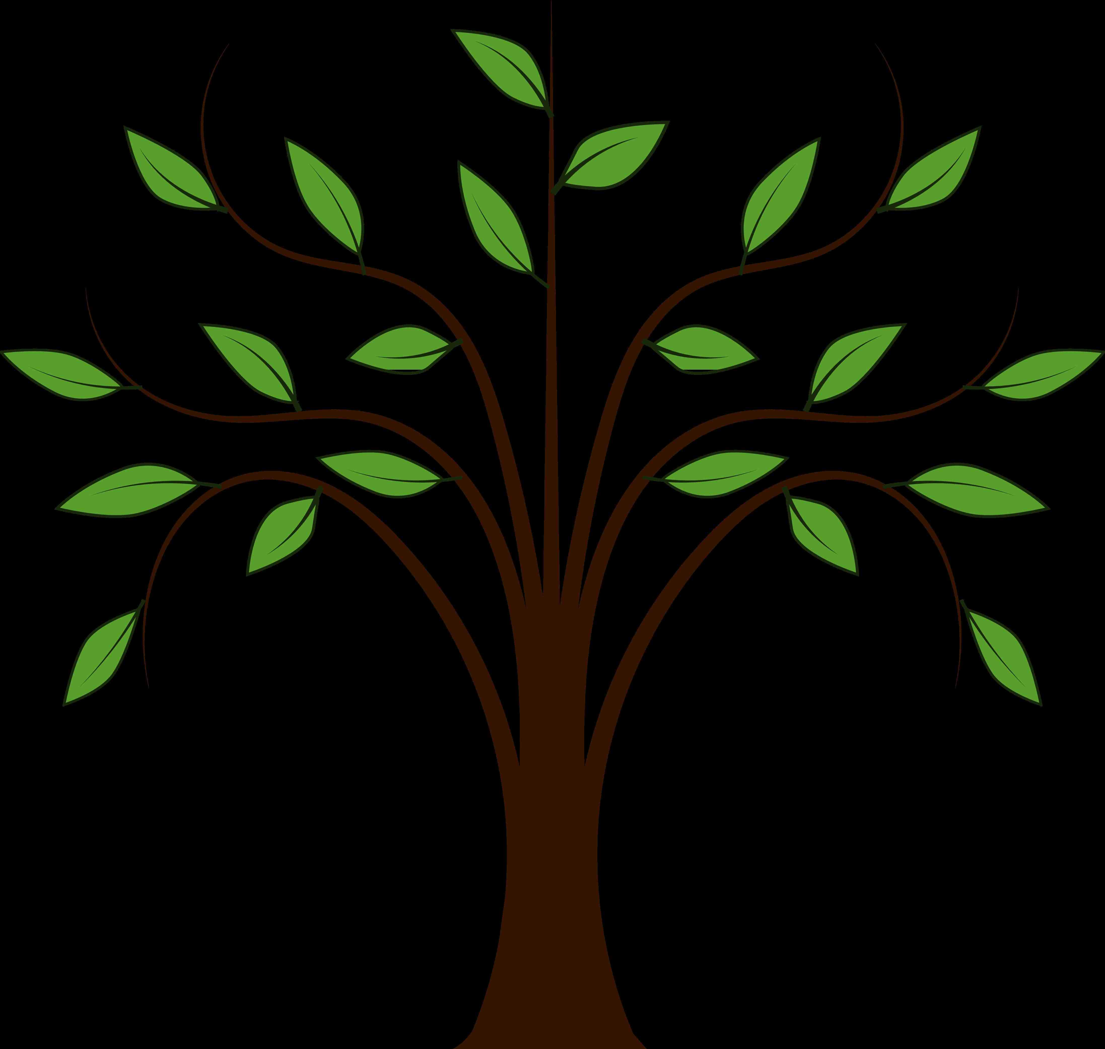 Afarsemon balsam tree clipart.