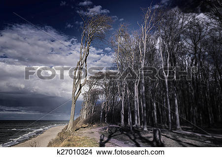 Stock Photo of Ghost forest on the Baltic Sea k27010324.