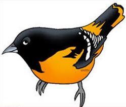 Free Baltimore Oriole Clipart.