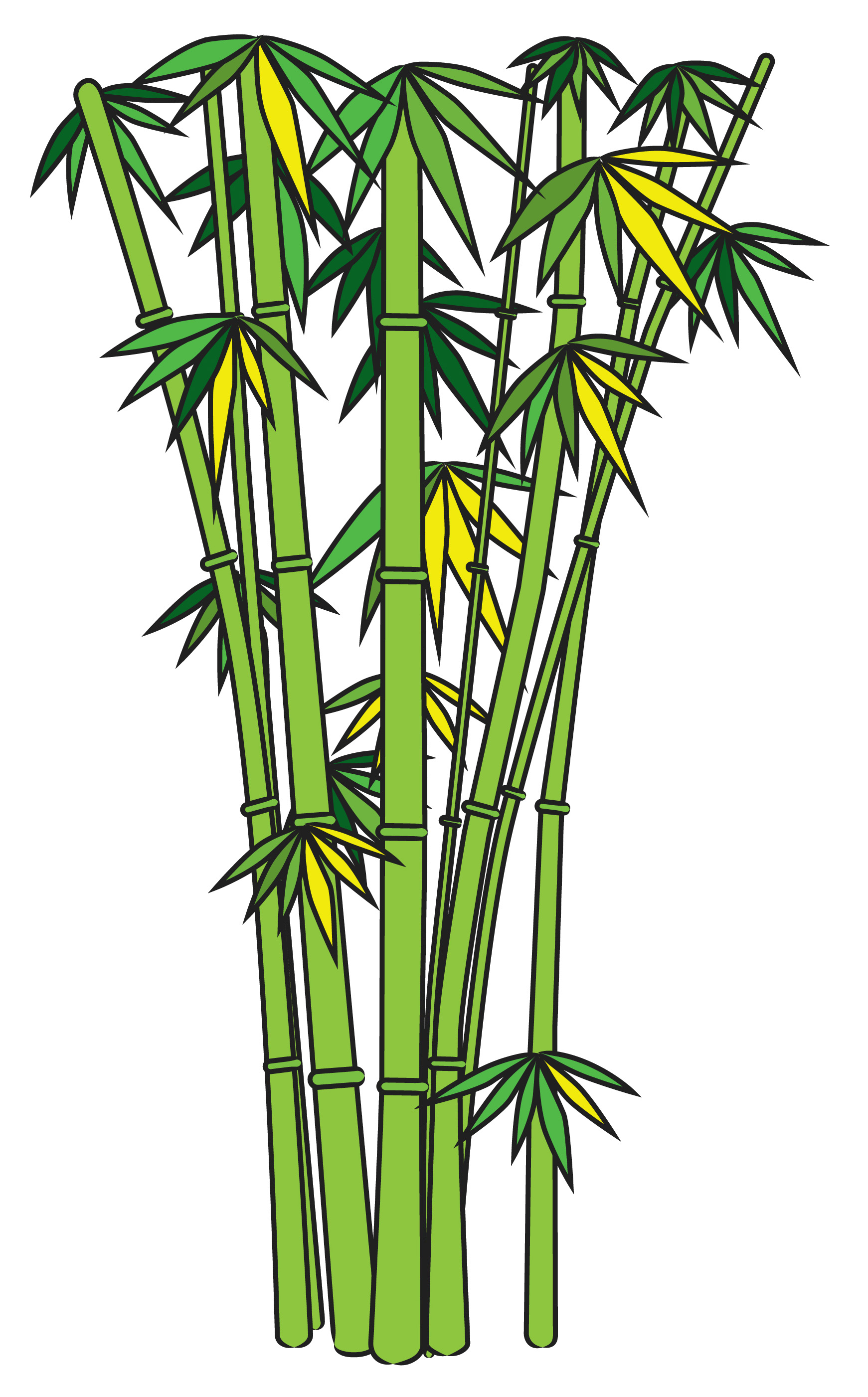 Bamboo plants clipart.