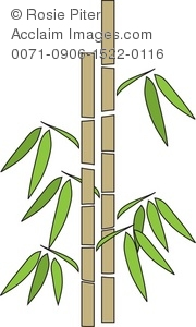 Clip Art Illustration Of A Stand Of Bamboo.