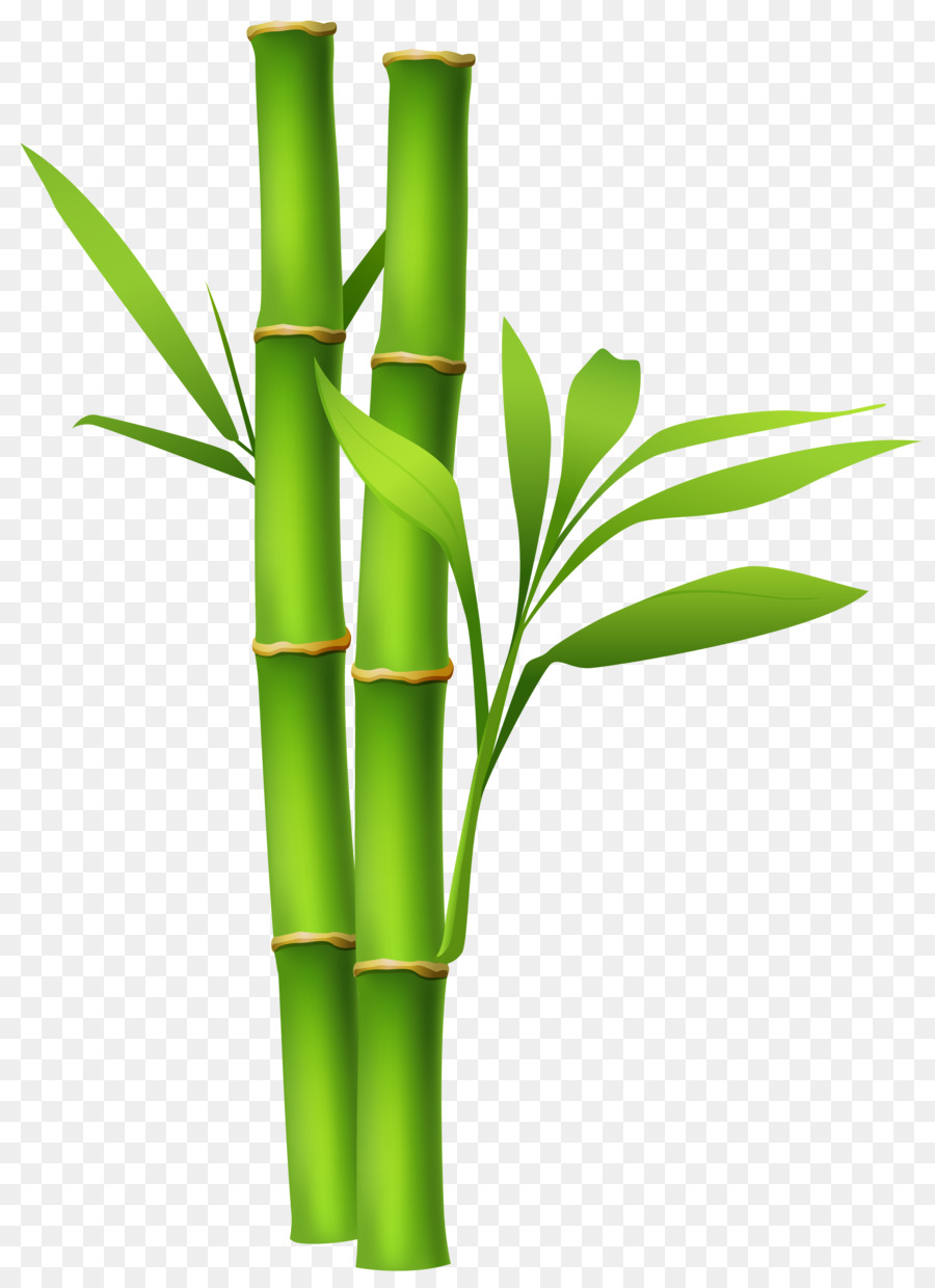 Bamboo Background png download.