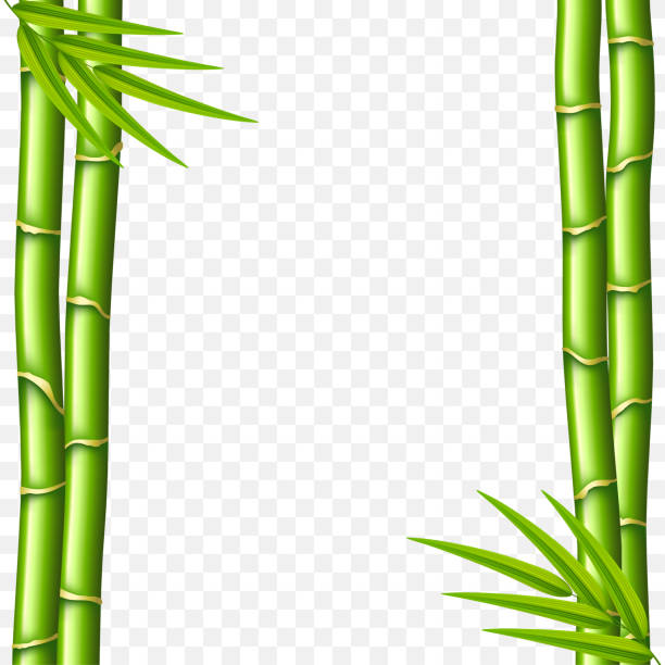Best Clip Art Of A Bamboo Border Illustrations, Royalty.