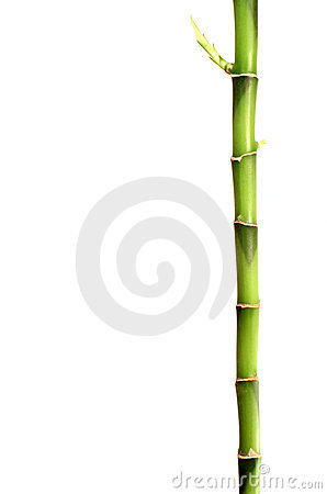 Bamboo Stick Stock Photos, Images, & Pictures.