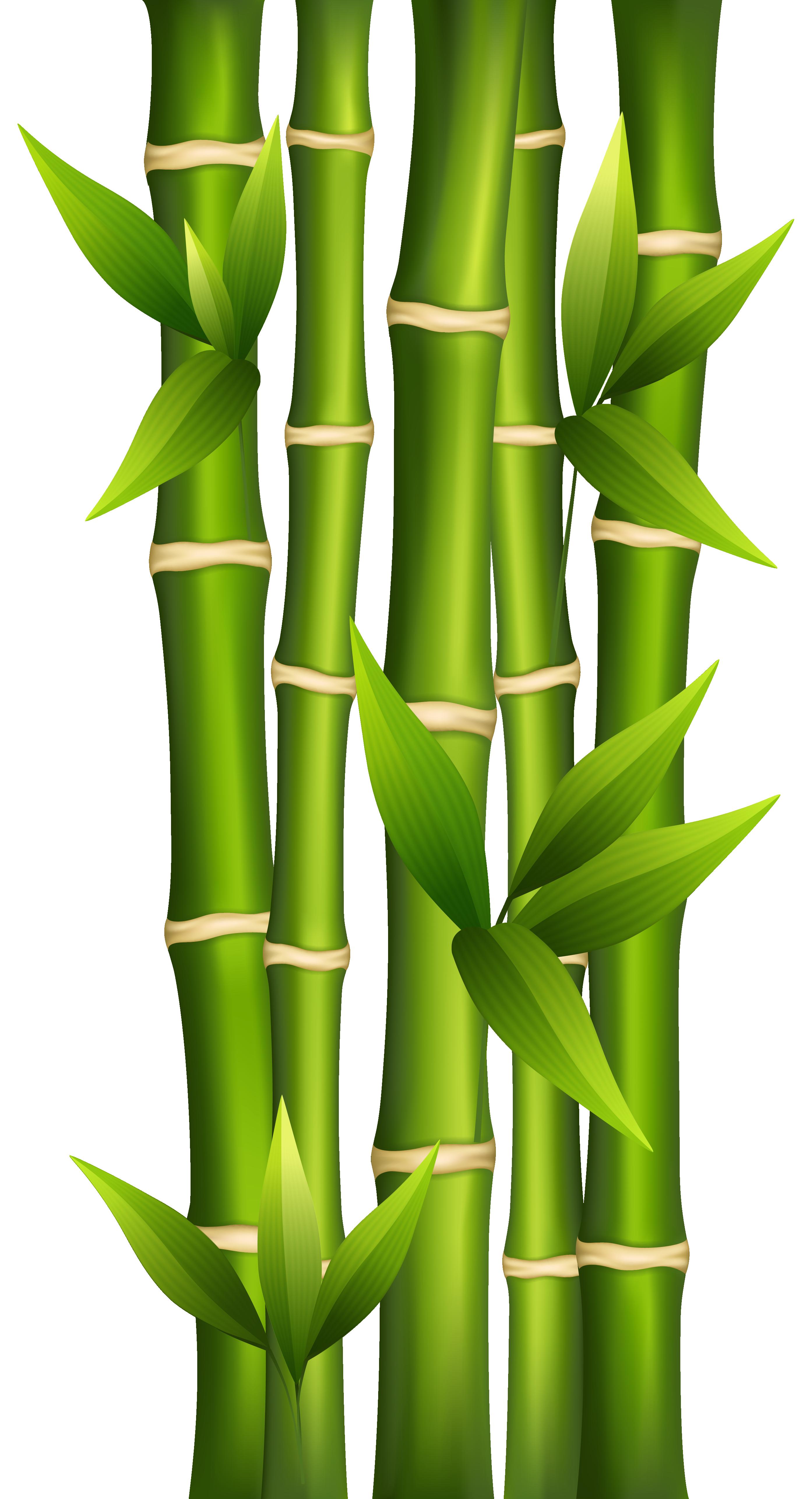 Bamboo clipart 2.