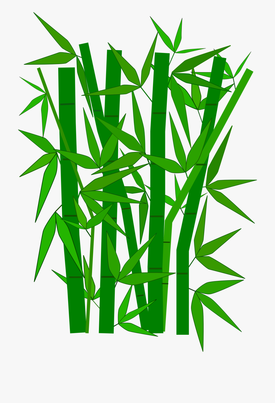 Bamboo Graphic.