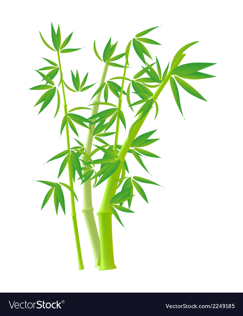 Bamboo Stock Photo Images clipart.