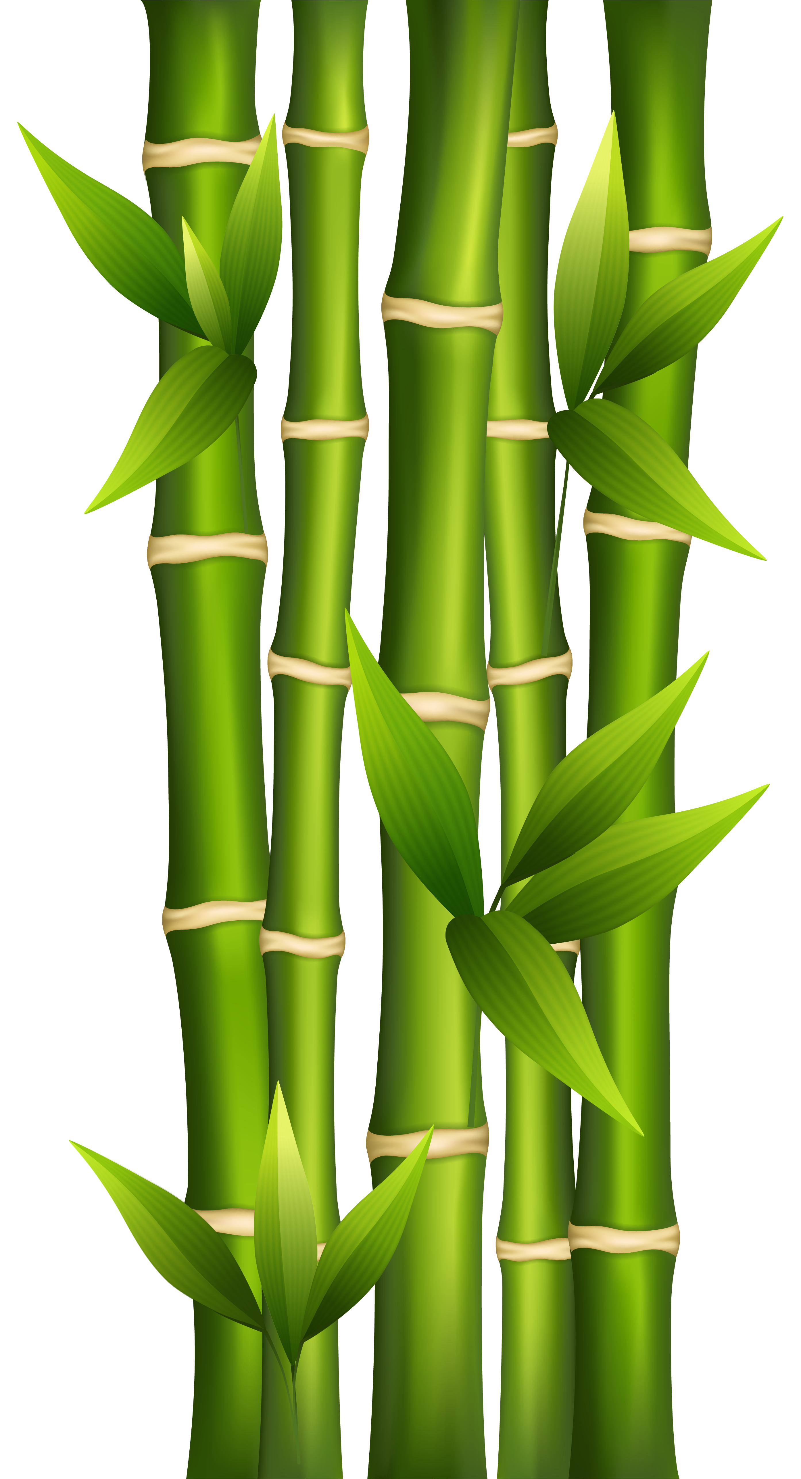 Bamboo clipart clipground