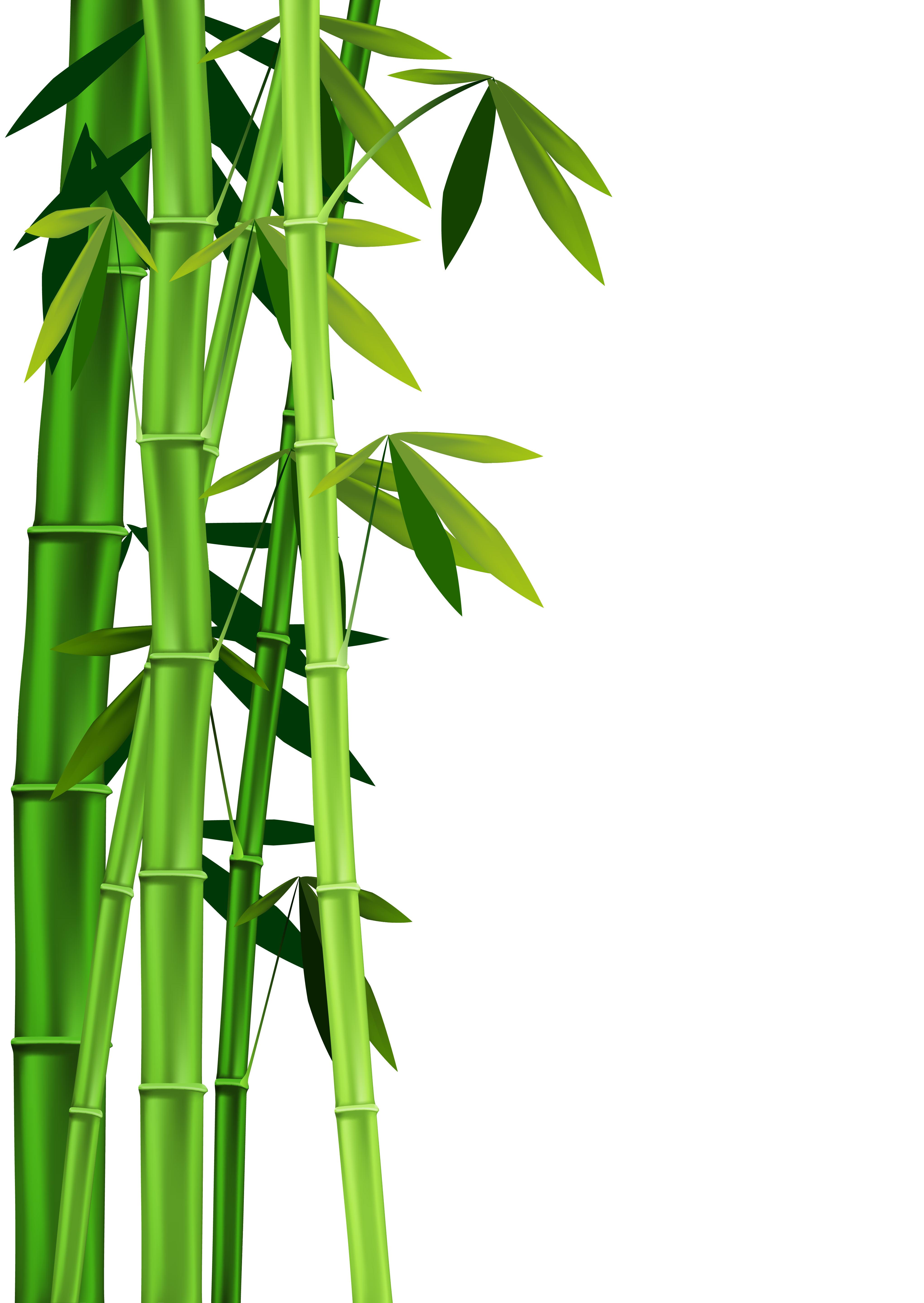 Bamboo Clip Art.