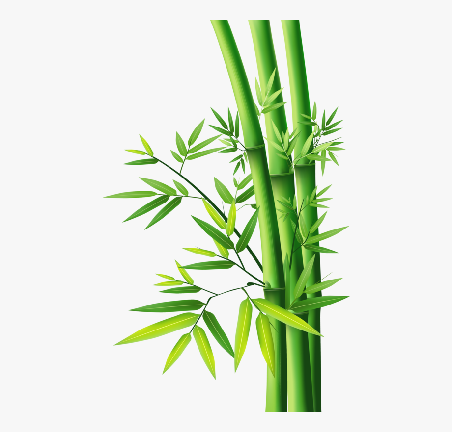 Bamboo Png, Download Png Image With Transparent Background.
