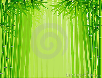 Bamboo Forest Background Stock Image.