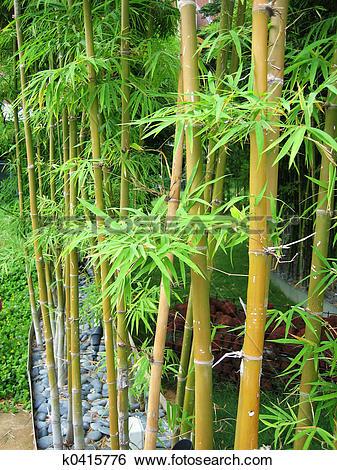 Stock Images of Bamboo Garden 2 k0415776.