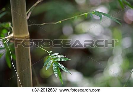 Picture of Redeem Bamboo Garden, Singai, Sarawak, Malaysia. u37.