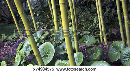 Stock Image of LACMA bamboo garden x74984575.