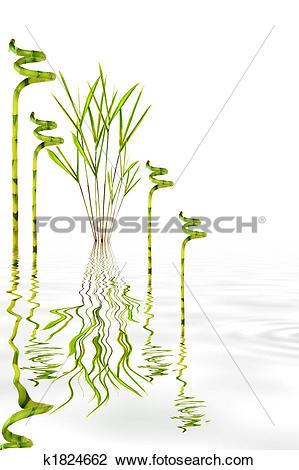 Stock Photo of Bamboo Garden k1824662.
