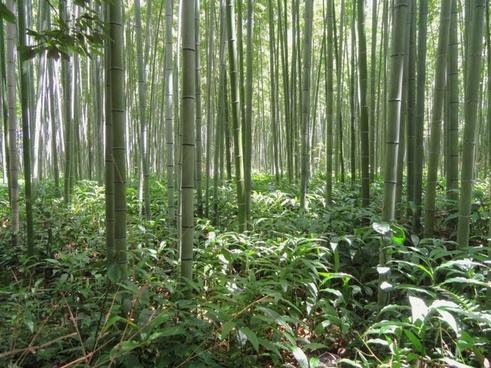 Bamboo mats free stock photos download (163 Free stock photos) for.