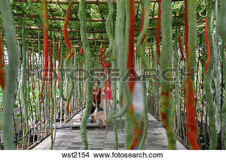 Stock Photo of plant in greenhouse wst2154.