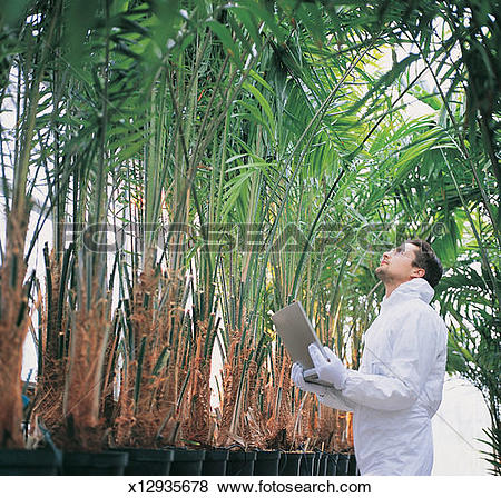 Pictures of Scientist Collecting Data From Palms in a Greenhouse.