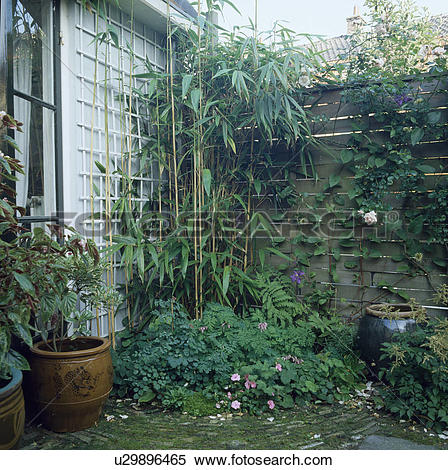 Stock Image of Trellis on white wall in town garden with fence.