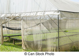 Stock Photographs of plastic green house.