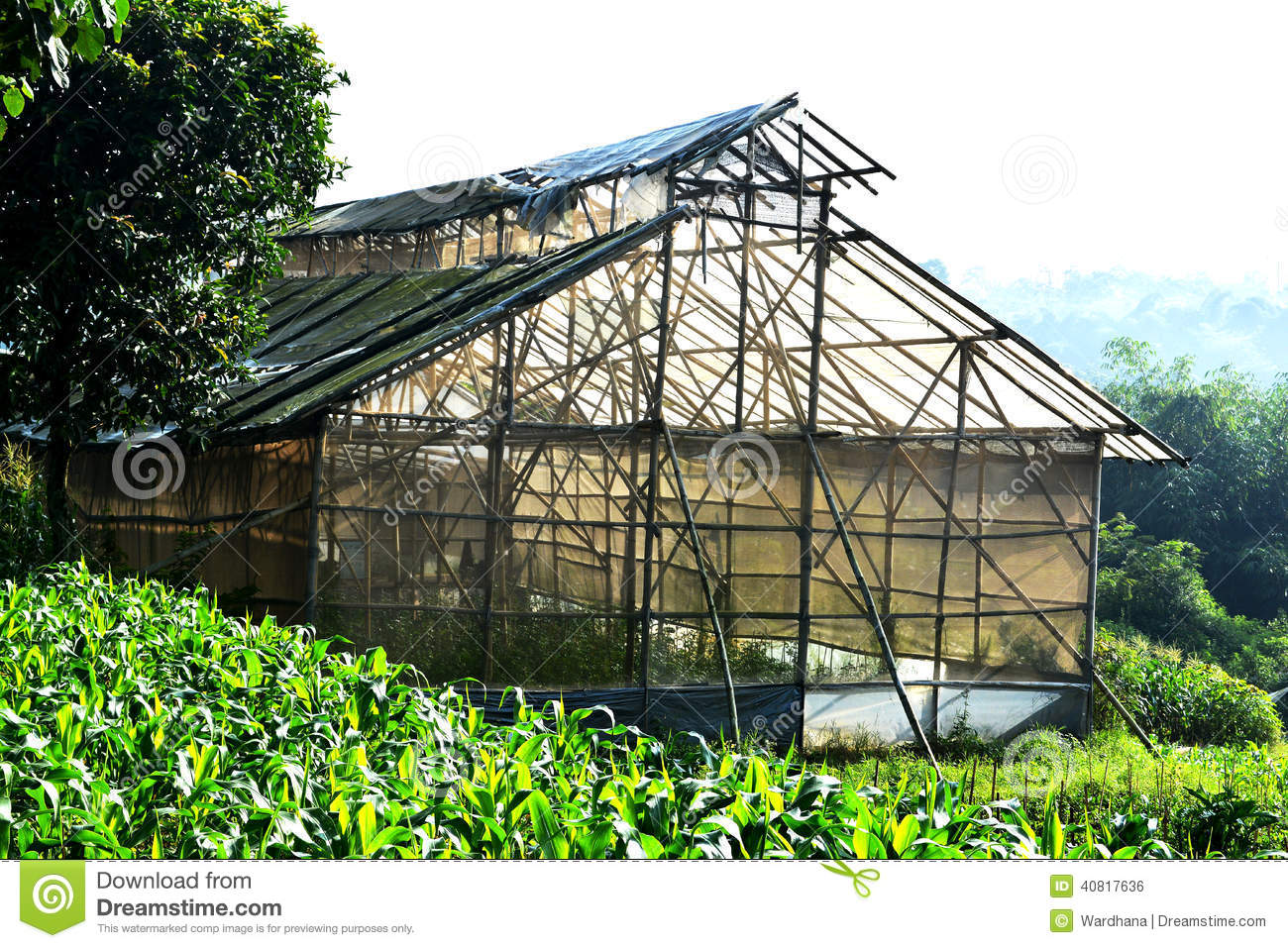 Abandon Green House Made From Bamboo And Plastic Stock Photo.