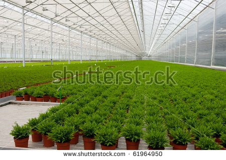 Greenhouse Interior Stock Photos, Royalty.