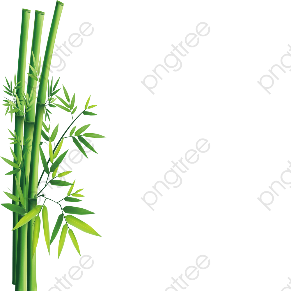 Bamboo, Bamboo Clipart, Green PNG Transparent Image and Clipart for.