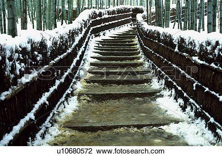 Stock Photo of Bamboo grove and snow u10680572.
