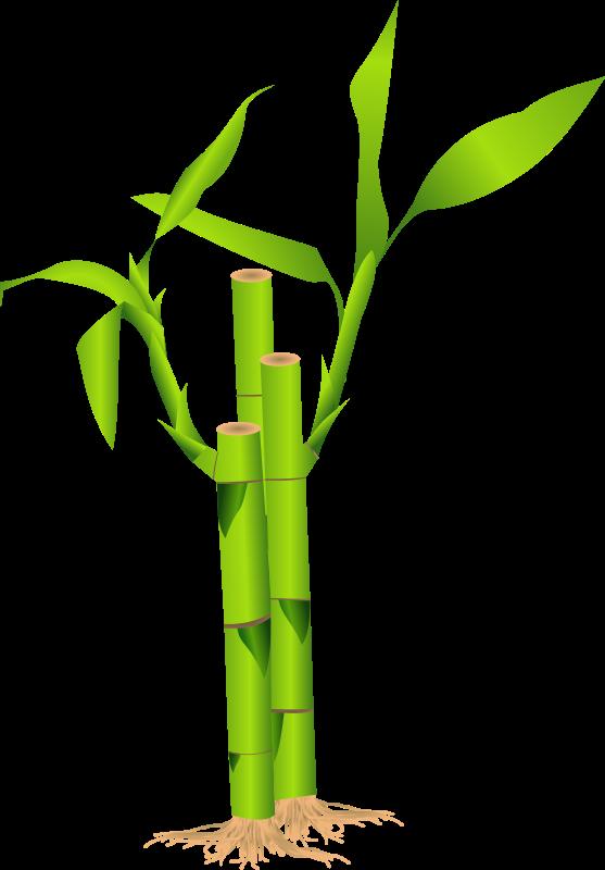 Bamboo Leaf Clip Art.