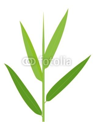 Bamboo Leaf Clipart.