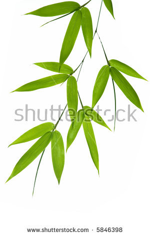 Bamboo Leaves Isolated Stock Photos, Royalty.