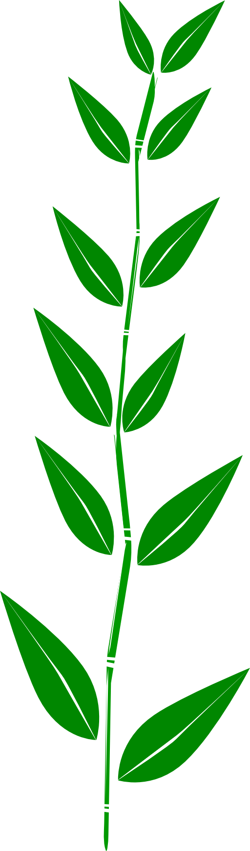 Bamboo Leaf Clipart.