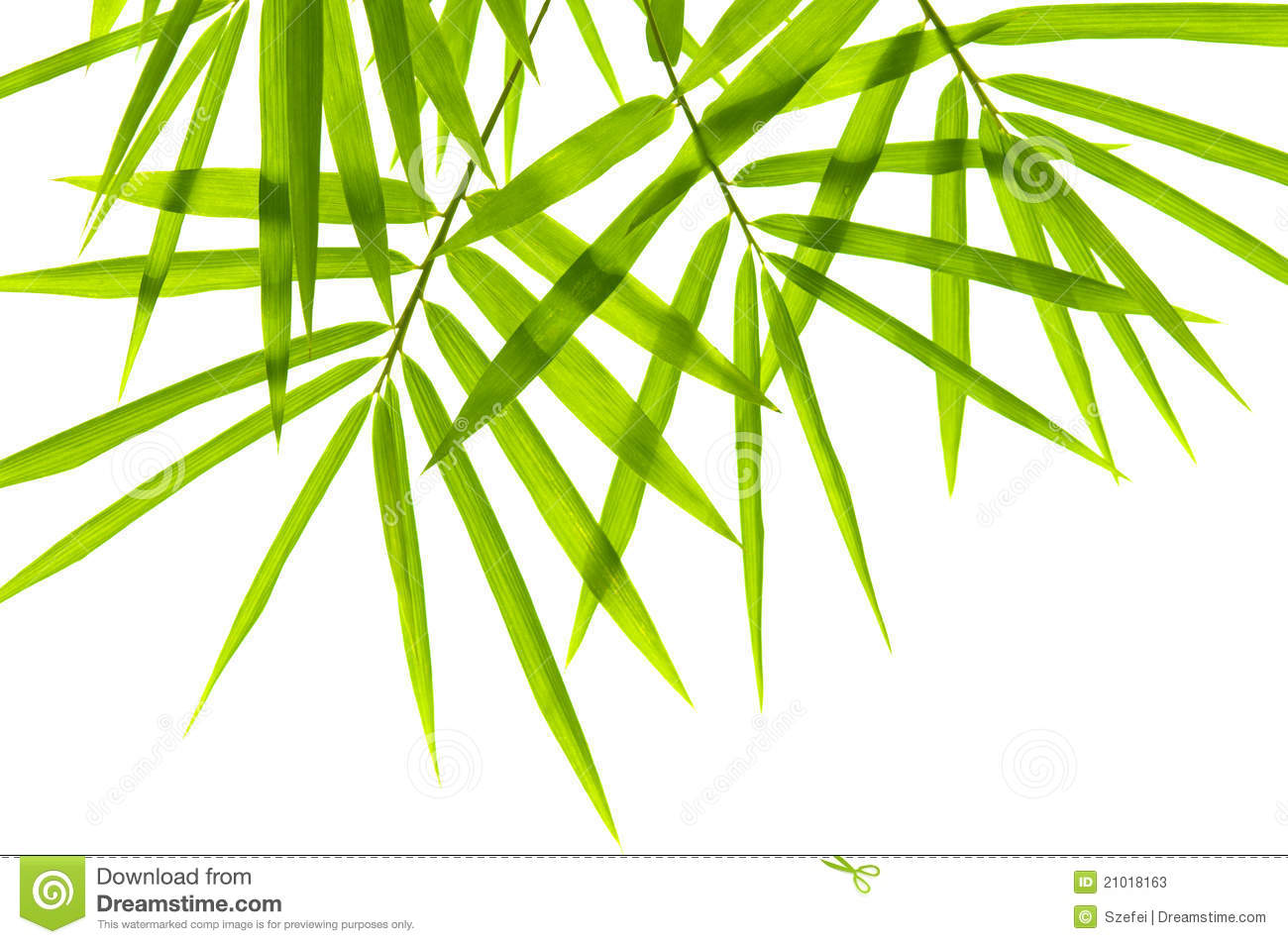 Bamboo Leaves Stock Image.