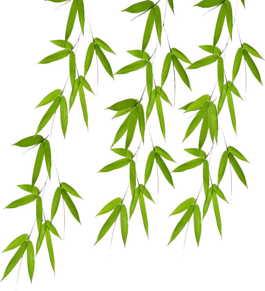 Bamboo Leaves Clip Art.