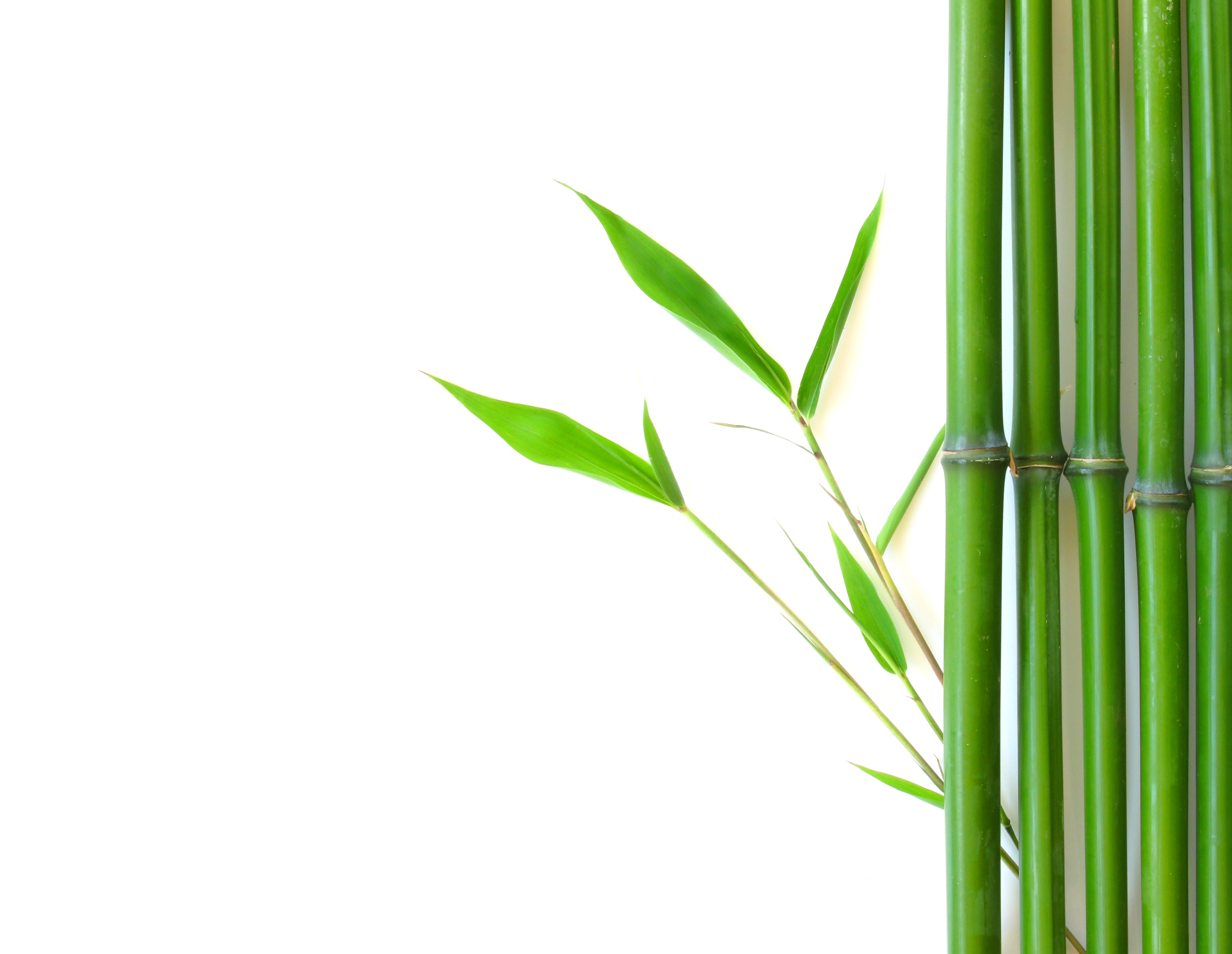 Bamboo leaves clipart clipground