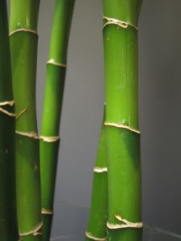 Bamboo Node Vector.