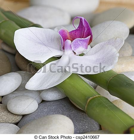 Picture of Orchid and bamboo.