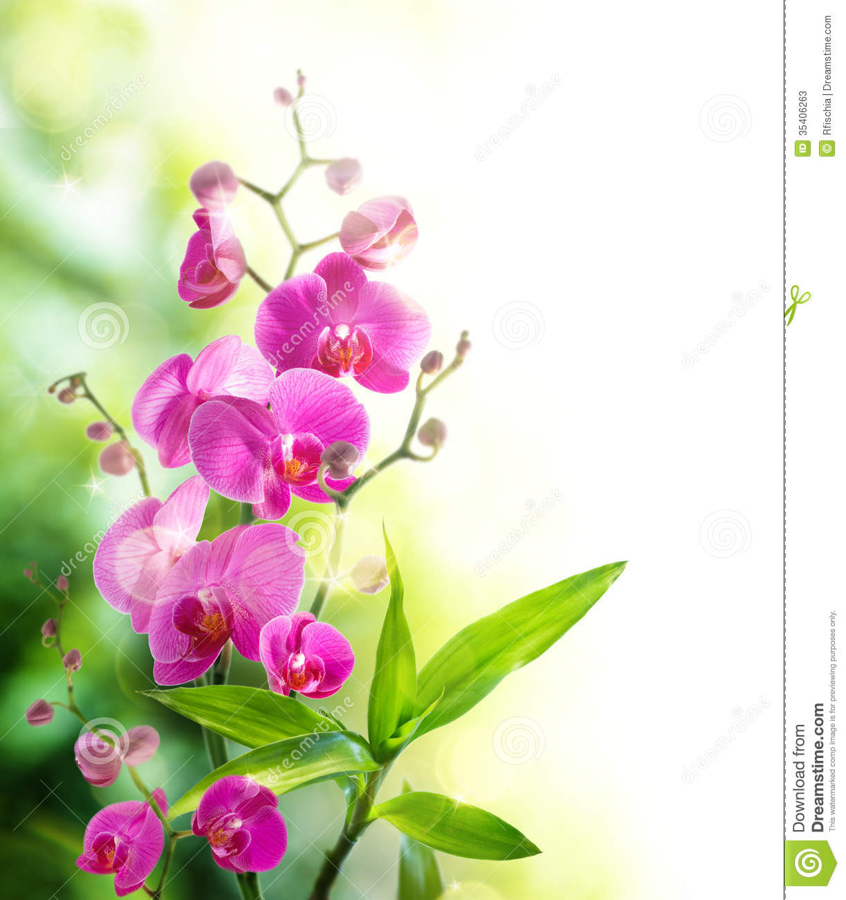 Beautyful Orchid And Bamboo For Border Treatment Spa Stock Photos.
