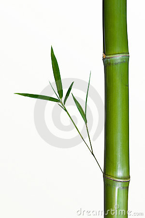 Bamboo Stalks Clipart Clipground