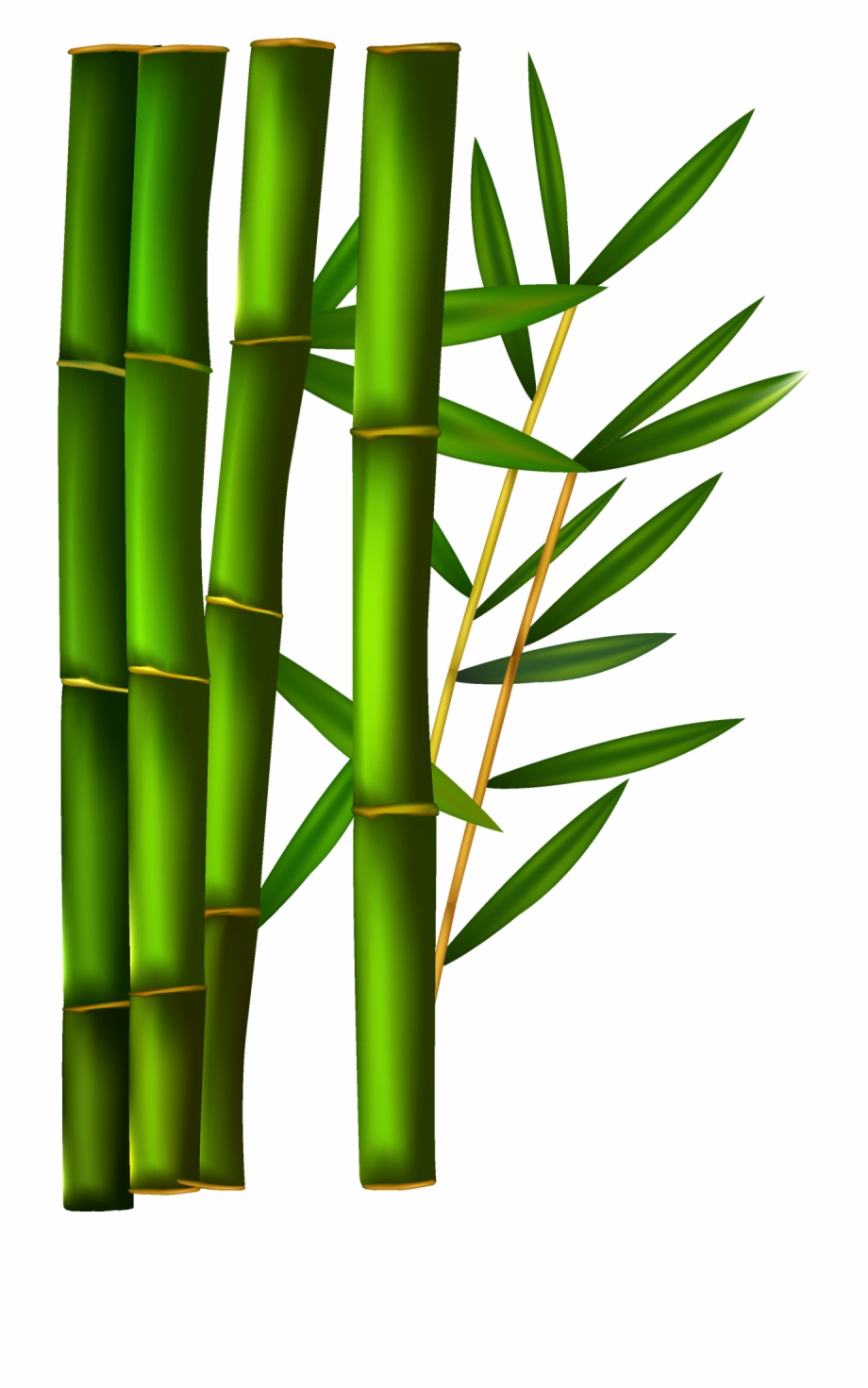 Transparent Background Bamboo Clipart.