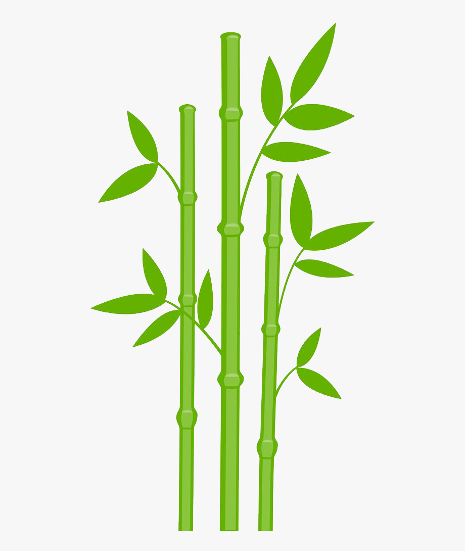 Bamboo Drawing Leaves.