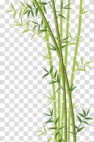 Bamboo Vector PNG clipart images free download.